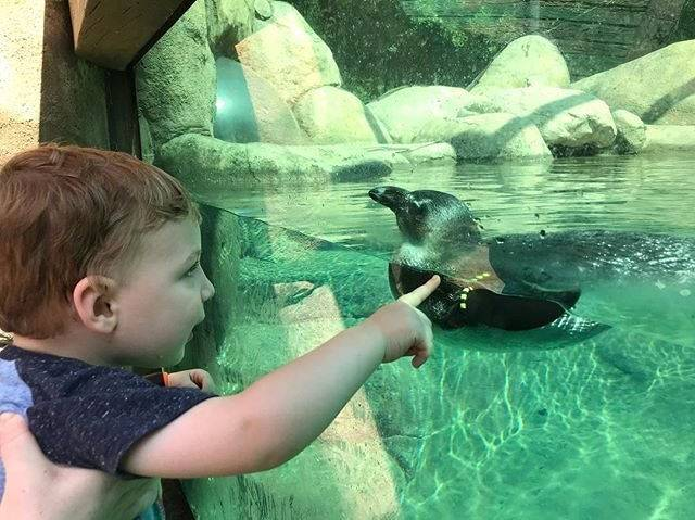 Little Rock Zoo-a boy and his penguin
